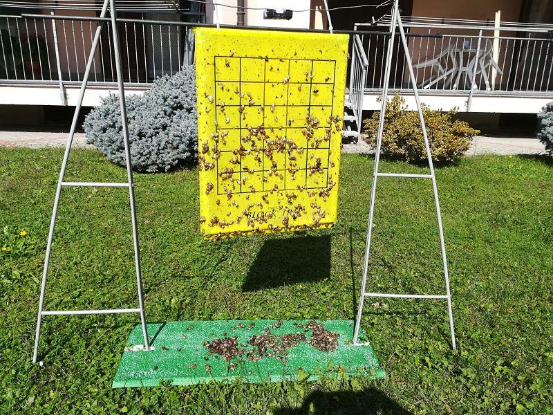 block trap con cimici